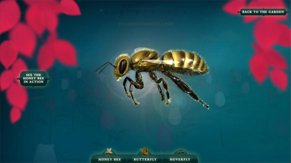 Pollinator-bee