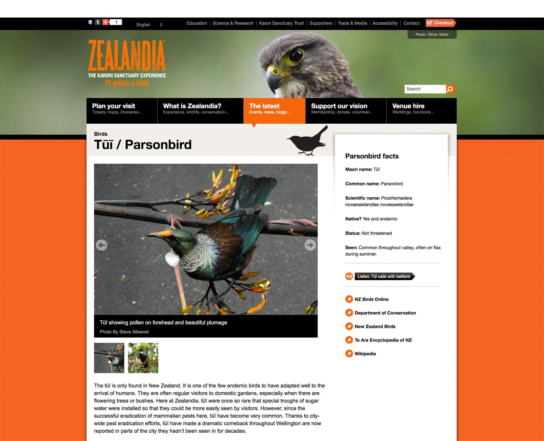 zealandia bird detail